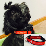 Click here for more information about Adjustable Dog Collar